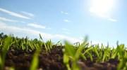 Descubierto cómo funciona el silenciamiento génico de las plantas