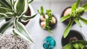 plantas-en-una-habitacion