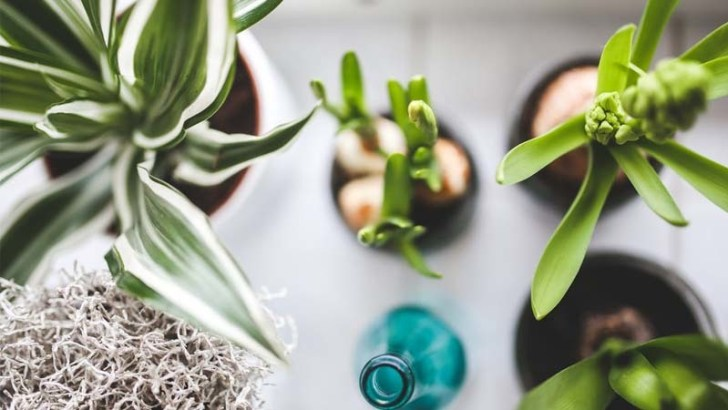 ¿Pueden dejarnos sin oxígeno las plantas de nuestra habitación?