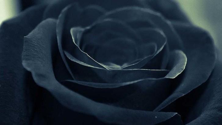 El lugar donde crecen las rosas negras