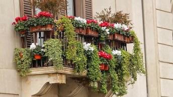 Flores para crear la terraza perfecta