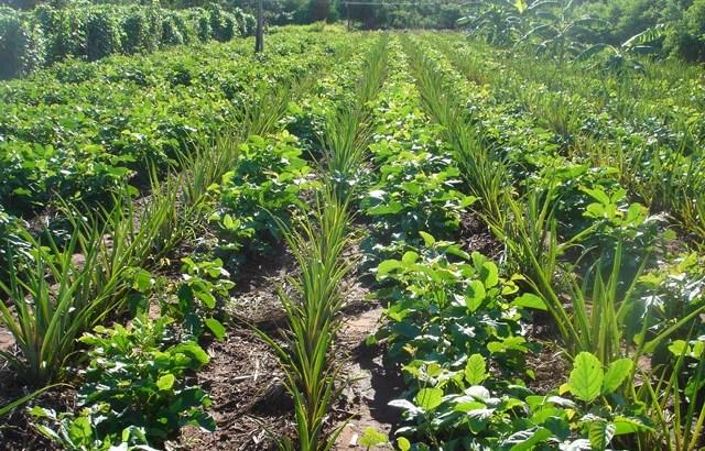 Familias de cultivos del huerto