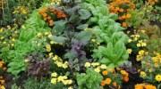 Asociación de cultivos: cómo sacar máximo rendimiento a tu huerto.