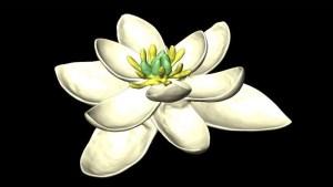 la-primera-planta-con-flor