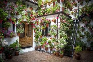 flores-y-plantas-en-el-hogar