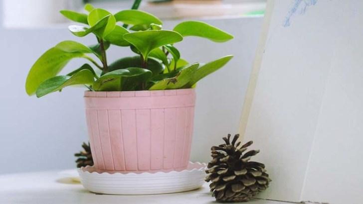 Evita que tus plantas sufran en verano