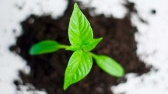 Como comprar plantas y elegir bien