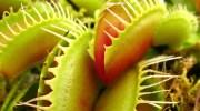 Las tres trampas de las plantas carnívoras