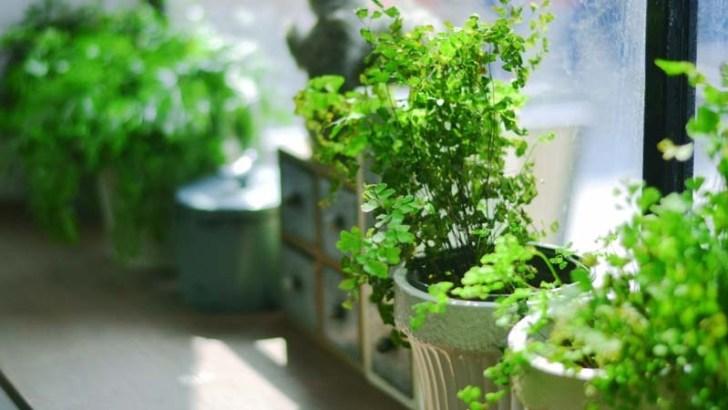 Dónde colocar las plantas