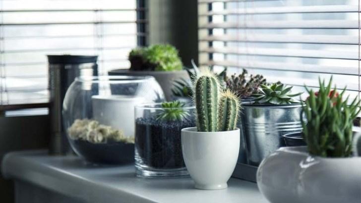 La luz natural y las plantas