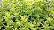 Hablar con las plantas es posible con ChatterPlant