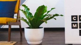 Cómo elegir plantas de interior