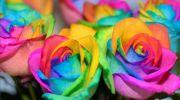 ¿Cómo cambiar el color de las rosas?