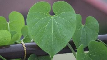 Crean un accesorio que mide la clorofila en las plantas