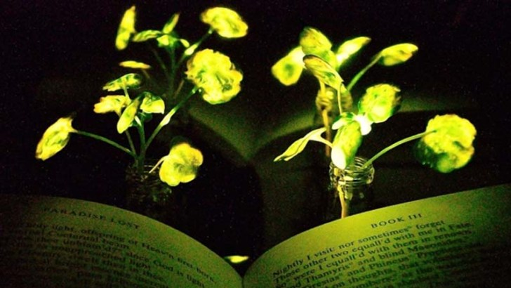 Luz y plantas nanobiónicas