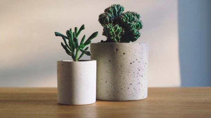 Plantas que limpian nuestro hogar