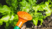 Tips de riego del jardín en verano
