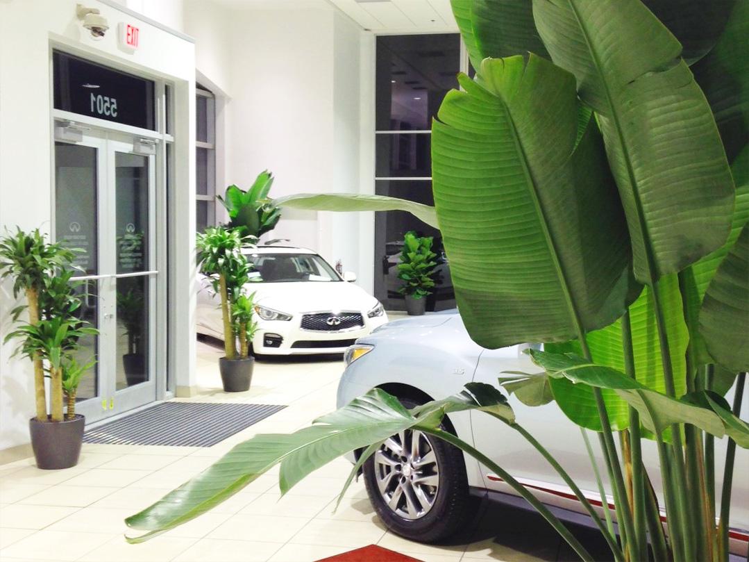 Car Showroom Indoor Landscaping