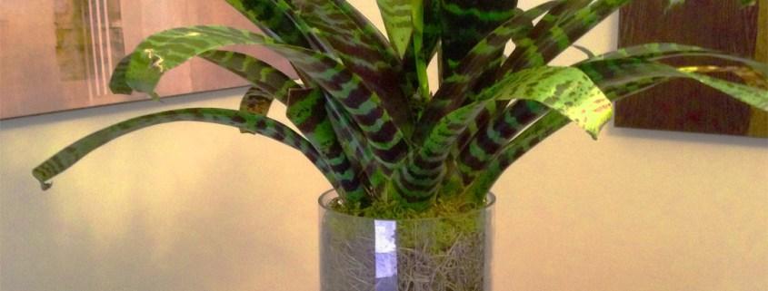 Bromeliad Arrangement Indoor Plants