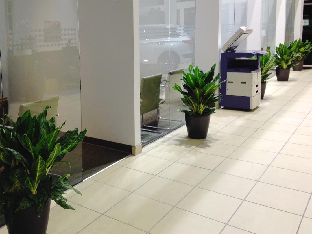 Car Showroom Indoor Plants