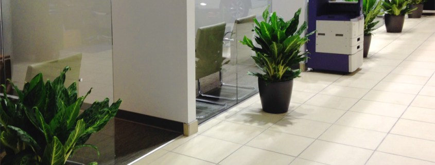 indoor-plants-car-showroom