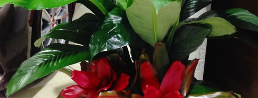indoor-plants-showroom