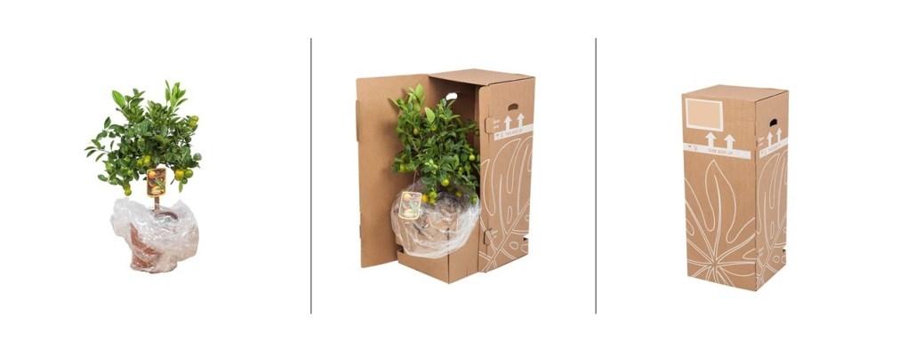 planten-direct-van-de-kweker-verpakking