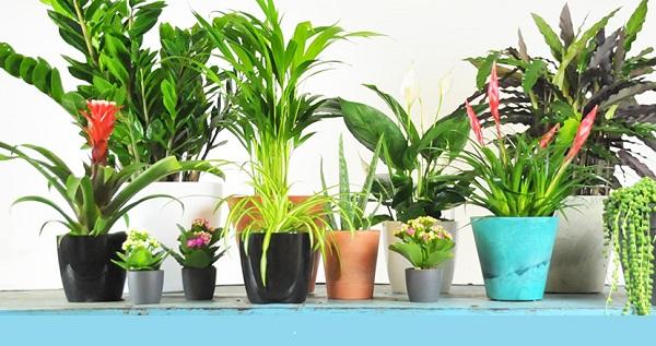 luchtzuiverende planten in huis goed voor je gezondheid
