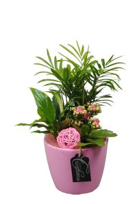 planten arrangement