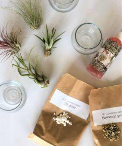 luchtplantjes DIY pakket glazen potjes