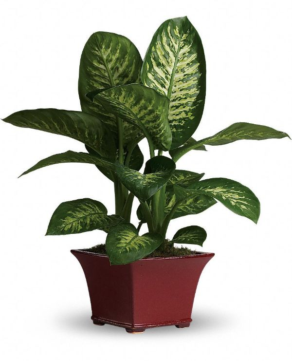 33 Best Indoor House Plants For Your Home And Pets