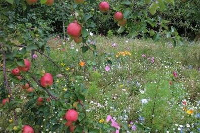 The Chapel Garden, which is open to groups, has fruit underplanted with wildflowers