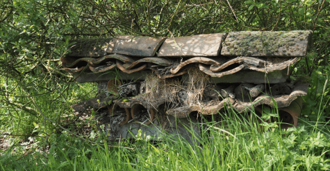 The garden has many sites exclusively dedicated to creating homes for inspects, especially solitary bees