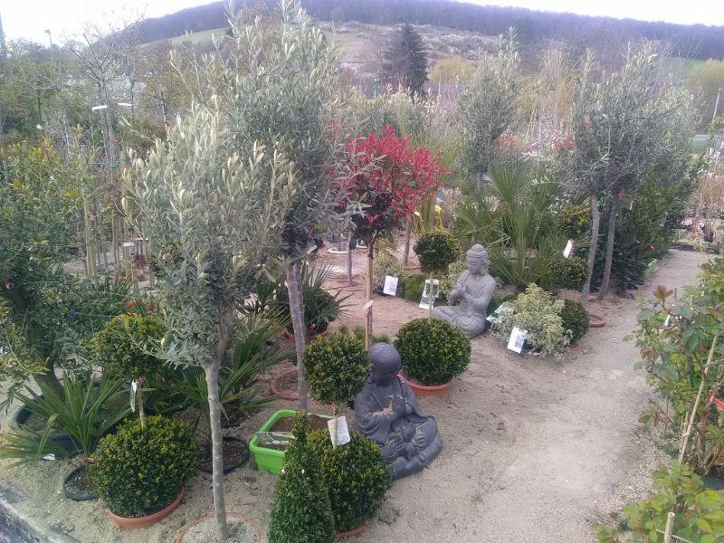 jardinerie triplet jardinerie