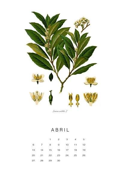 calendario-planthae4
