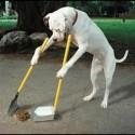 hondenoverlast