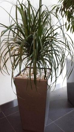 indoor tropical plants