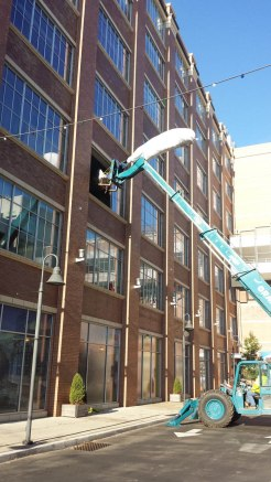crane to move giant tree