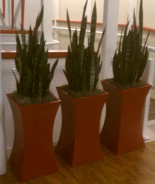 Office Plant Containers