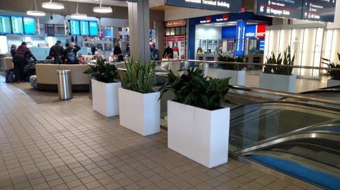 tropical plant with large planters