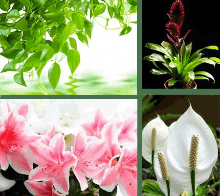 Live Tropical Plants
