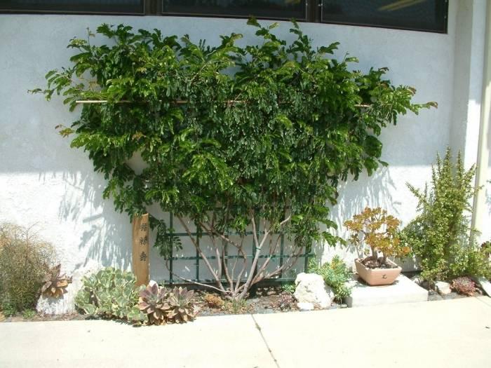 Raised Patio Planter