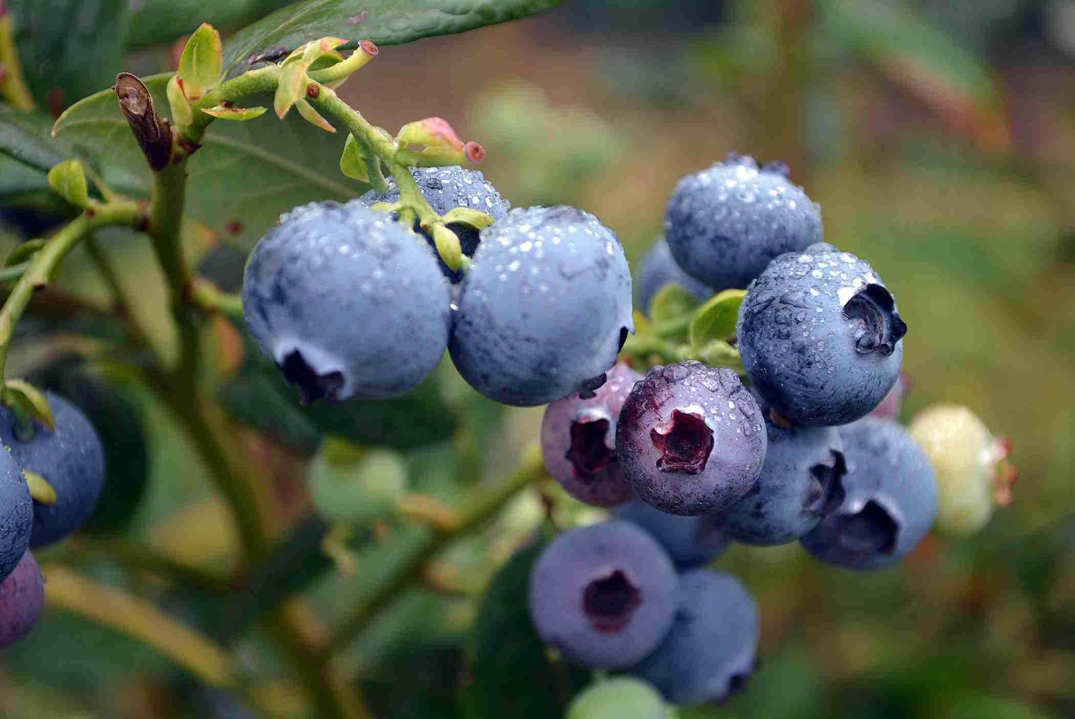 Az egyetlen gyümölcs, amiből mindennap! érdemes enned