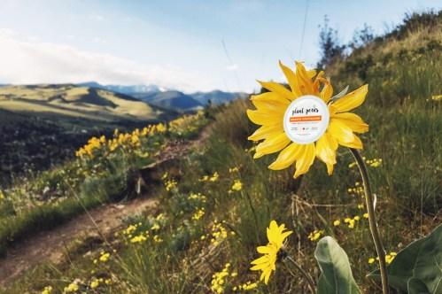Plant Perks Vegan Cheeze container on a sunflower on mount jumbo missoula montana