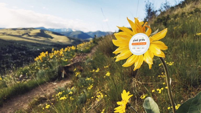 Missoula-Made Vegan Cheeze Is Available Throughout the Valley