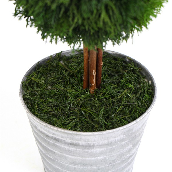preserved ball topiary pot