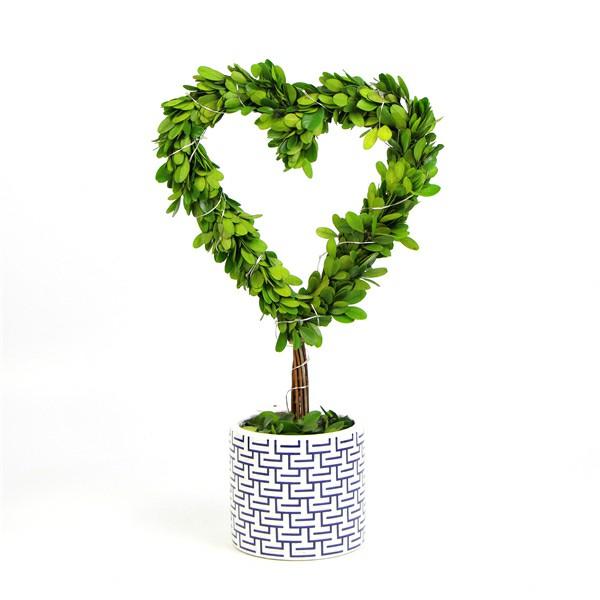Preserved boxwood tree heart shape