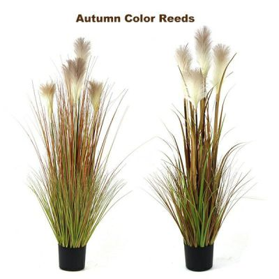 Feature Reed Grass Pot with Autumn Color