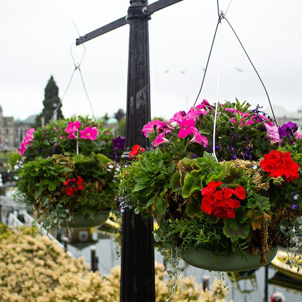 hanging artificial plants outdoor landscape
