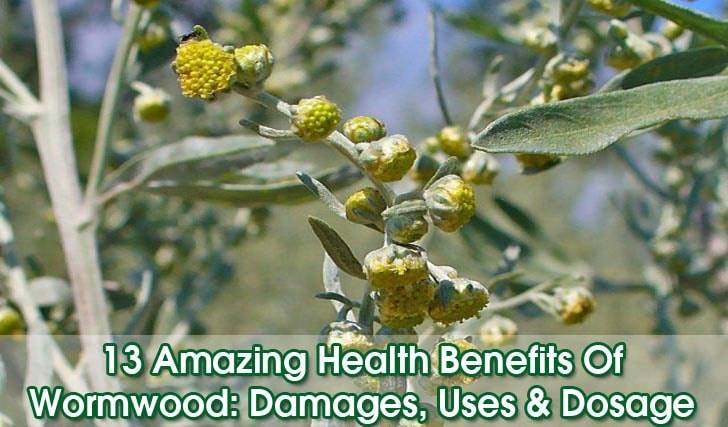 """Beneficios del ajenjo """"width ="""" 728 """"height ="""" 427 """"srcset ="""" https://i2.wp.com/www.plantshospital.com/wp-content/uploads/2019/08/Wormwood-benefits.jpg?w=1140&ssl=1 728w, https: // www. plantshospital.com/wp-content/uploads/2019/08/Wormwood-benefits-300x176.jpg 300w """"tamaños ="""" (ancho máximo: 728px) 100vw, 728px """"></p> <div class="""